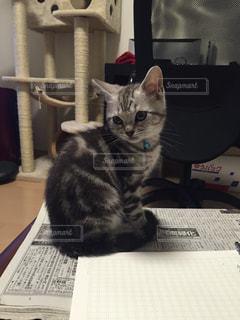 机の上に座っている猫の写真・画像素材[1051966]