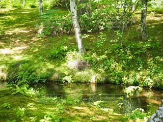 緑、川、山、夏休みの写真・画像素材[1355791]