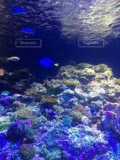 鮮やか魚たちの写真・画像素材[1052332]