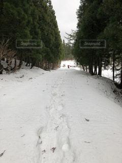 雪に覆われた山道の写真・画像素材[1052012]