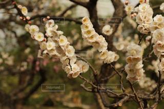 春の風景2の写真・画像素材[1053421]