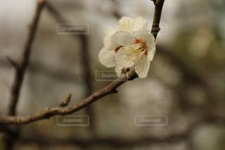春の風景。旧芝離宮庭園にて。の写真・画像素材[1053422]