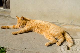 地面に横になって寝ている猫の写真・画像素材[1053405]