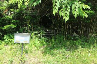 草木とポストの写真・画像素材[1230289]