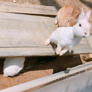 白い動物の上に座っている猫の写真・画像素材[1221425]