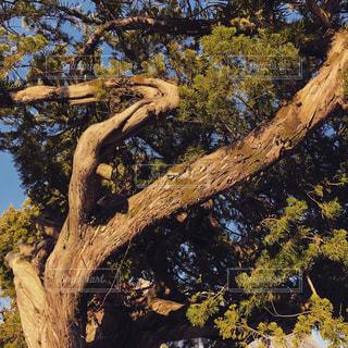 樹木の写真・画像素材[1053078]
