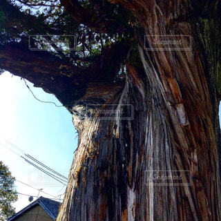 大きな木の写真・画像素材[1053248]