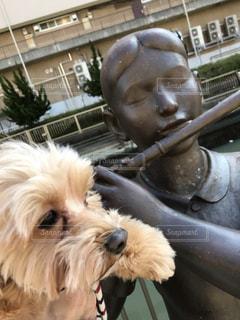 着ぐるみを着た犬の写真・画像素材[1053546]