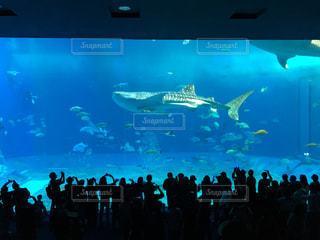 美ら海水族館のサメの写真・画像素材[1053326]