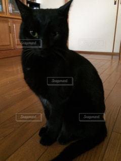 床に立っている黒い猫の写真・画像素材[1053433]