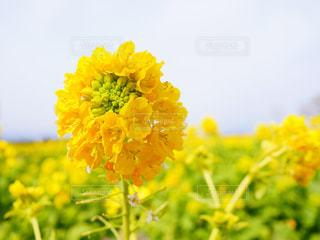春の訪れの写真・画像素材[1053377]