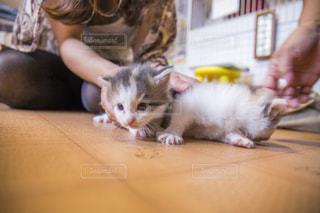 赤ちゃん猫の写真・画像素材[1061760]