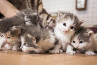 赤ちゃん猫達の写真・画像素材[1061761]