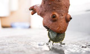 カエルに食われるミドリガメの写真・画像素材[1061775]