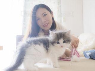愛猫ソラリスの写真・画像素材[1061779]