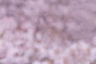 桜背景の写真・画像素材[1061819]