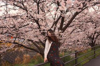 桜と女性の写真・画像素材[1061823]