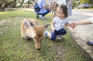 鹿をかわいがっている少年の写真・画像素材[3782735]
