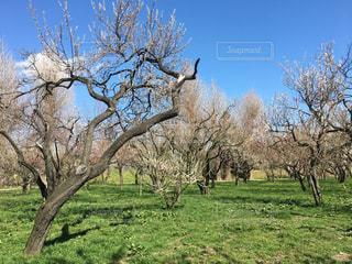 フィールドの大木の写真・画像素材[1062398]