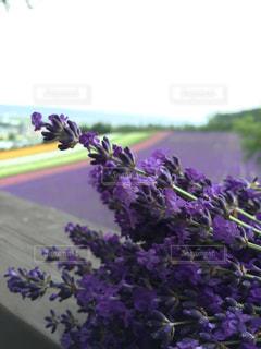植物の紫色の花の写真・画像素材[1053814]