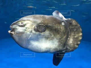 水面下を泳ぐ魚たちの写真・画像素材[1054279]