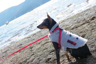 ビーチに立つAnimoの写真・画像素材[1055183]