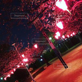夜に光の赤色の停止の写真・画像素材[1083768]