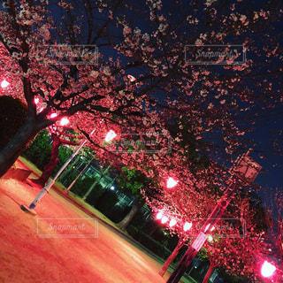 夜に光の赤色の停止の写真・画像素材[1083769]