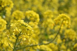 近くの花のアップの写真・画像素材[1053772]