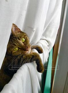 猫の写真・画像素材[158218]