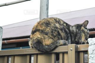 猫の写真・画像素材[1053851]