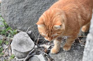 猫の写真・画像素材[1053852]