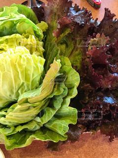 葉物野菜の写真・画像素材[1054040]