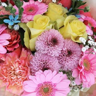 祝いの花束の写真・画像素材[1054286]