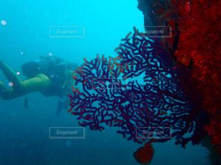 海の中のダイバーの写真・画像素材[1054381]