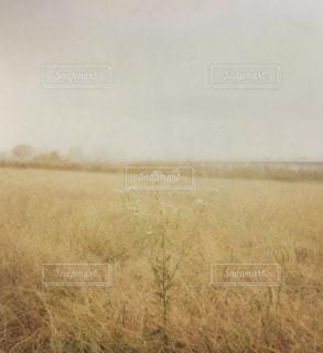 近くに乾いた草のフィールドのの写真・画像素材[1055486]