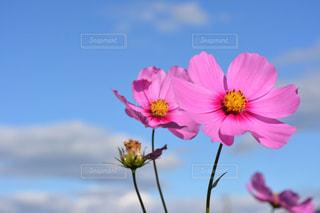 近くの花のアップ - No.1055275