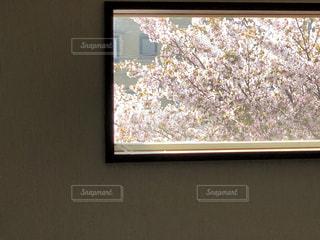 春限定の景色の写真・画像素材[1101777]