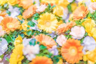 花だらけ!の写真・画像素材[1058794]