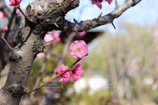 春の風物詩の写真・画像素材[1098594]
