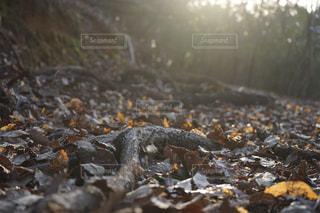 落ち葉の写真・画像素材[1056256]