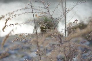 春が近いの写真・画像素材[1056258]