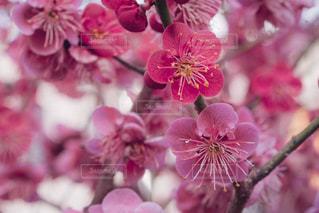 春の訪れの写真・画像素材[1056278]