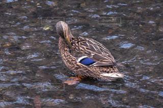 鳥の写真・画像素材[1137016]