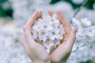 花を持っている手の写真・画像素材[1137024]