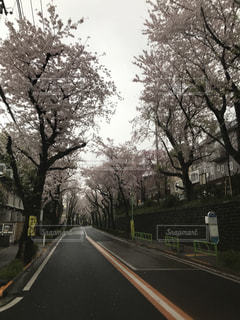 桜並木の写真・画像素材[1058113]