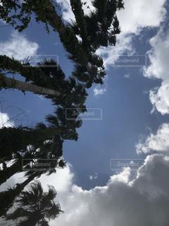 夏の空と雲の写真・画像素材[1549384]