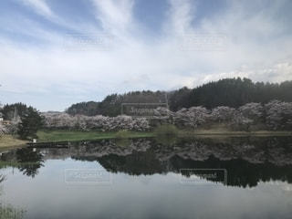 桜に囲まれた湖の写真・画像素材[2083238]
