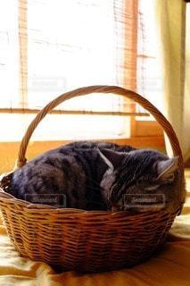 猫の写真・画像素材[88957]