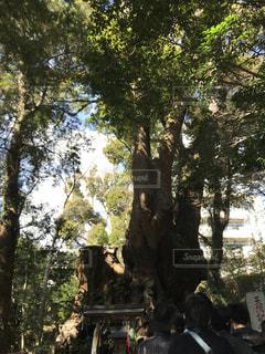 大木の写真・画像素材[1057395]